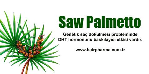 Saw Palmetto Saç Dökülmesi